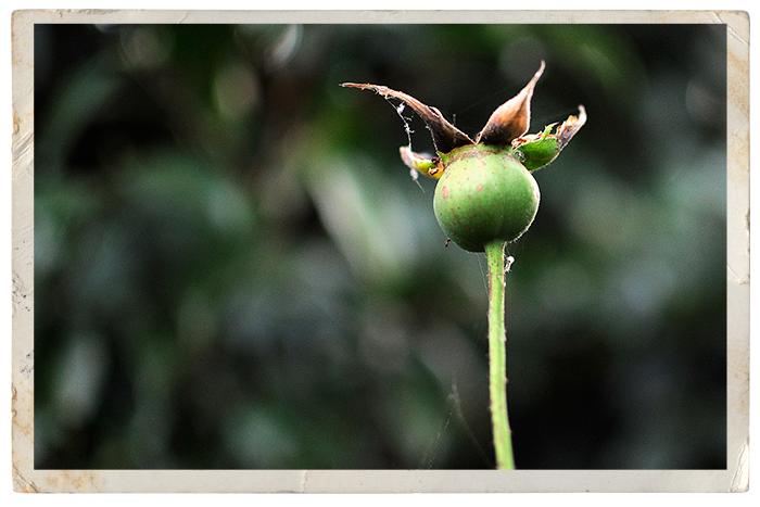 Spidery-garden-4