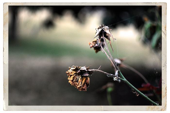 Spidery-garden-3