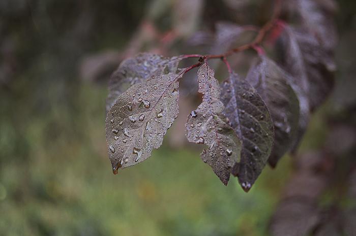 October-morning-2
